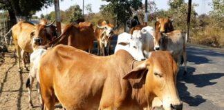 The Rashtriya Kamdhenu Aayog, a government body under the Department of Animal Husbandry and Dairying, has postponed